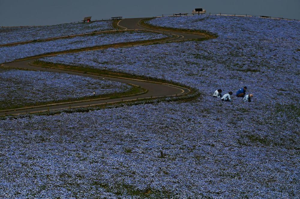 Một thế giới rực rỡ sắc hoa bất chấp đại dịch Covid-19 Ảnh 7
