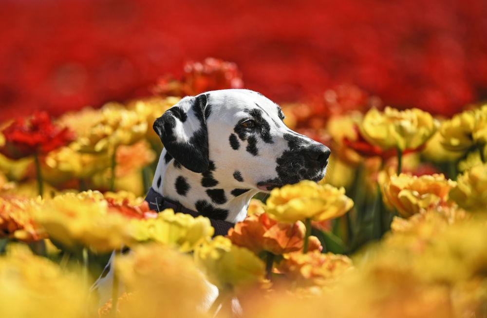 Một thế giới rực rỡ sắc hoa bất chấp đại dịch Covid-19 Ảnh 12