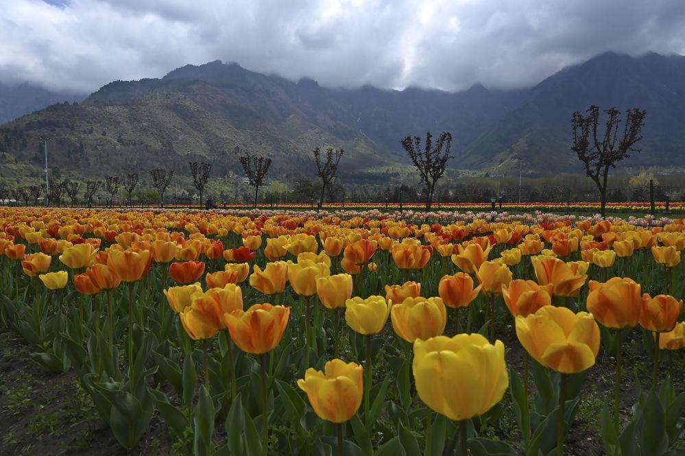 Một thế giới rực rỡ sắc hoa bất chấp đại dịch Covid-19 Ảnh 9