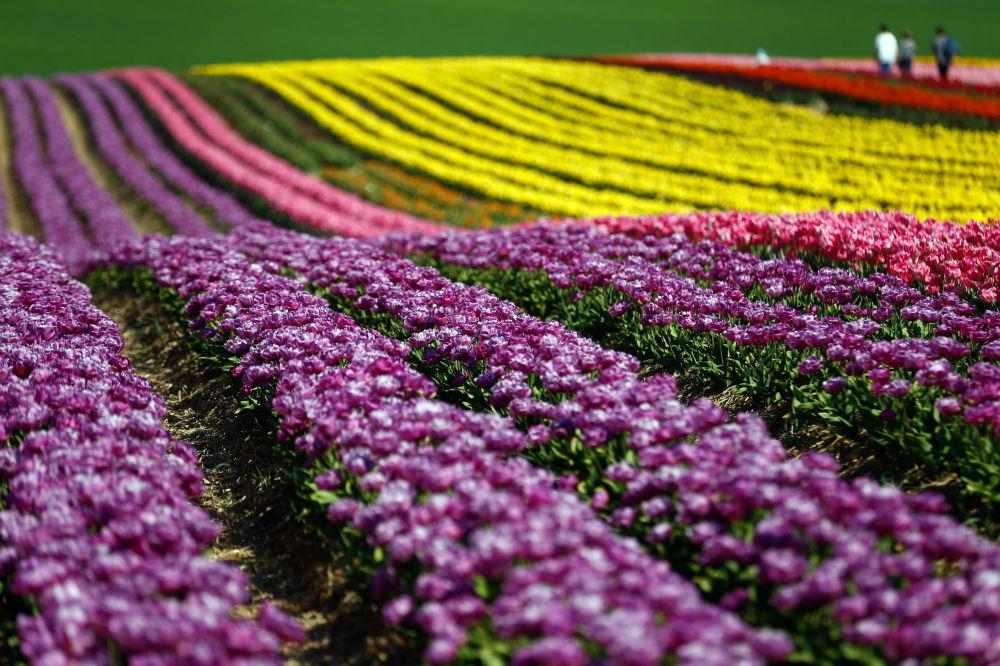 Một thế giới rực rỡ sắc hoa bất chấp đại dịch Covid-19 Ảnh 1