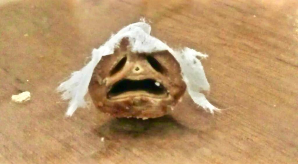 Bức ảnh 'khuôn mặt mếu máo' như mất sổ gạo gây sốt MXH, nhưng 'bí mật' được tiết lộ lại khiến dân mạng nghiêng ngả cười Ảnh 2