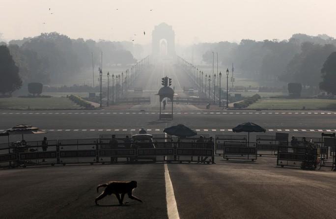 Ấn Độ: Bầy khỉ hung hãn đánh cắp mẫu máu Covid-19 Ảnh 1