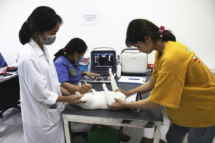 Mục sở thị Bệnh viện dành cho thú cưng lớn nhất Việt Nam Ảnh 3