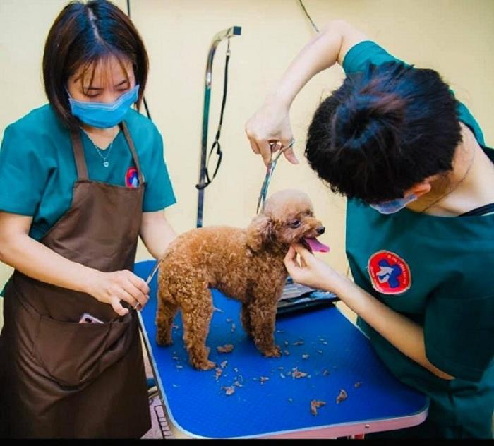 Mục sở thị Bệnh viện dành cho thú cưng lớn nhất Việt Nam Ảnh 9