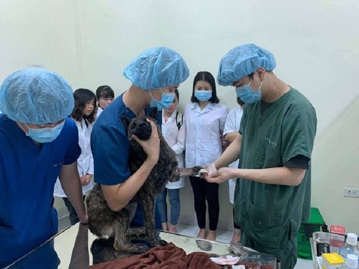 Mục sở thị Bệnh viện dành cho thú cưng lớn nhất Việt Nam Ảnh 5