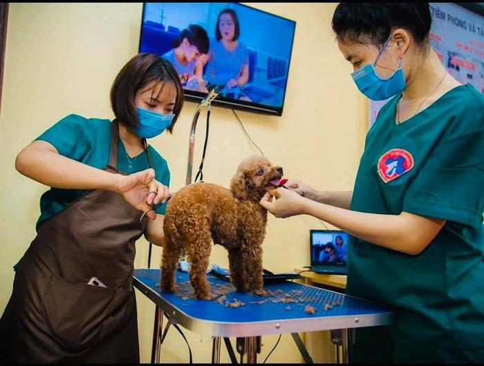 Mục sở thị Bệnh viện dành cho thú cưng lớn nhất Việt Nam Ảnh 10