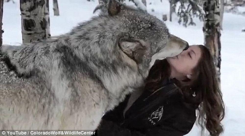 Tình bạn đáng kinh ngạc giữa con sói to lớn và cô gái xinh đẹp