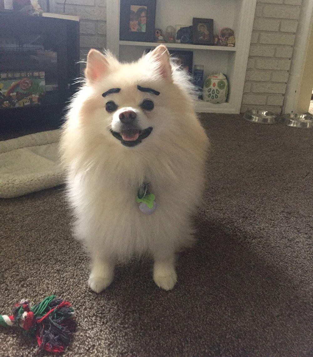 Biểu cảm cực hài hước của lũ chó khi được tô lông mày