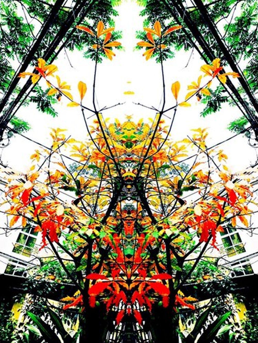 Bức ảnh chụp cây lá đỏ ngược sáng đã qua chỉnh sửa bằng iPhone 7 rất nghệ thuật. Ảnh: FB Ngô Bá Lục.