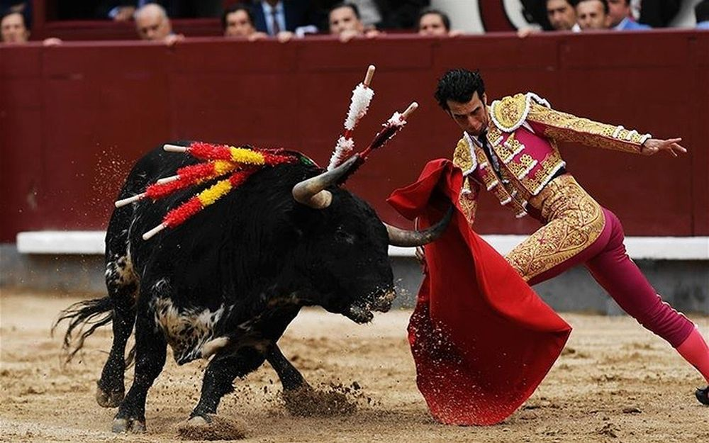 Kết quả hình ảnh cho đấu bò