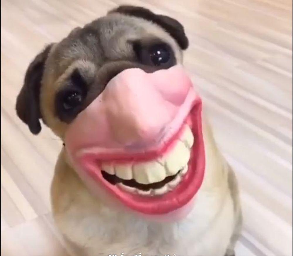 Đảm bảo chú chó này tham gia lễ hội hóa trang sẽ trở thành tâm điểm của buổi tiệc\u201d, \u201cTôi đã cười đến đau bụng với đoạn clip 20 giây này\u201d\u2026