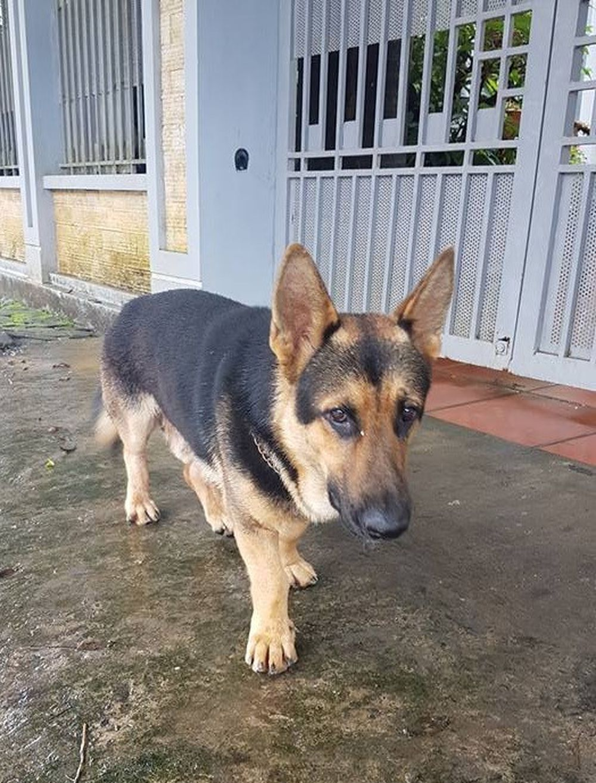 Gần đây một tài khoản tên Papaver Rhoeas đã đăng tải loạt hình một chú chó có thân hình vô cùng \u0027oái oăm\u0027. Mặc dù sở hữu gương mặt và bộ lông ...