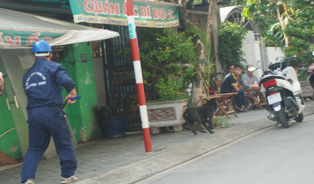 Đặc biệt, lúc 9 giờ, tại địa chỉ số 218 Huỳnh Tấn Phát (P.Tân Thuận Tây)  một chú chó phốc, được chủ mặc áo sạch sẽ, dạo nhởn nhơ trên vỉa hè.