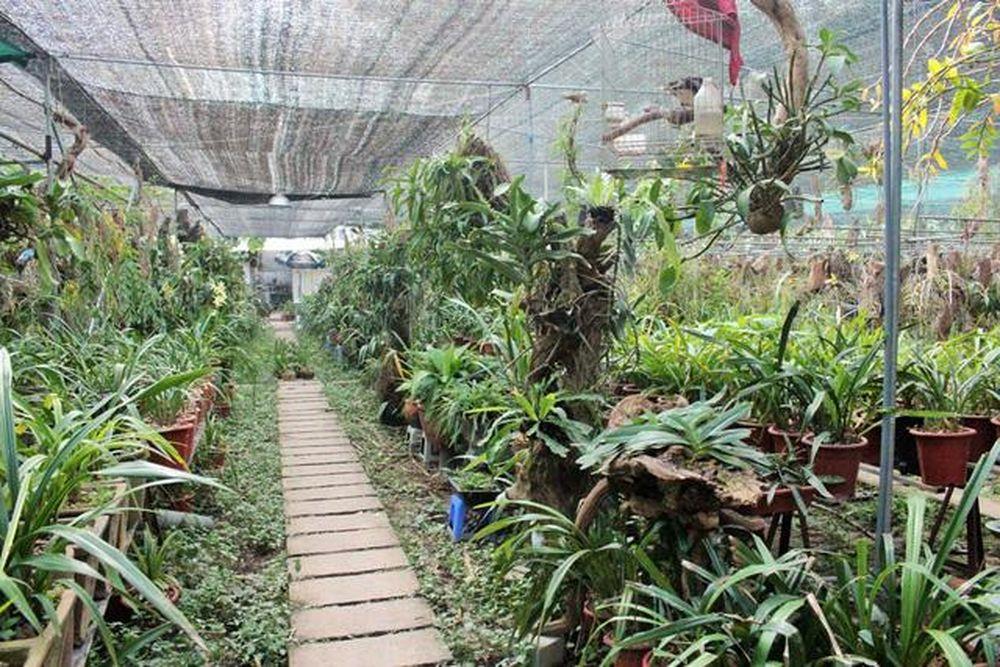 Vườn lan Đăng Nhân