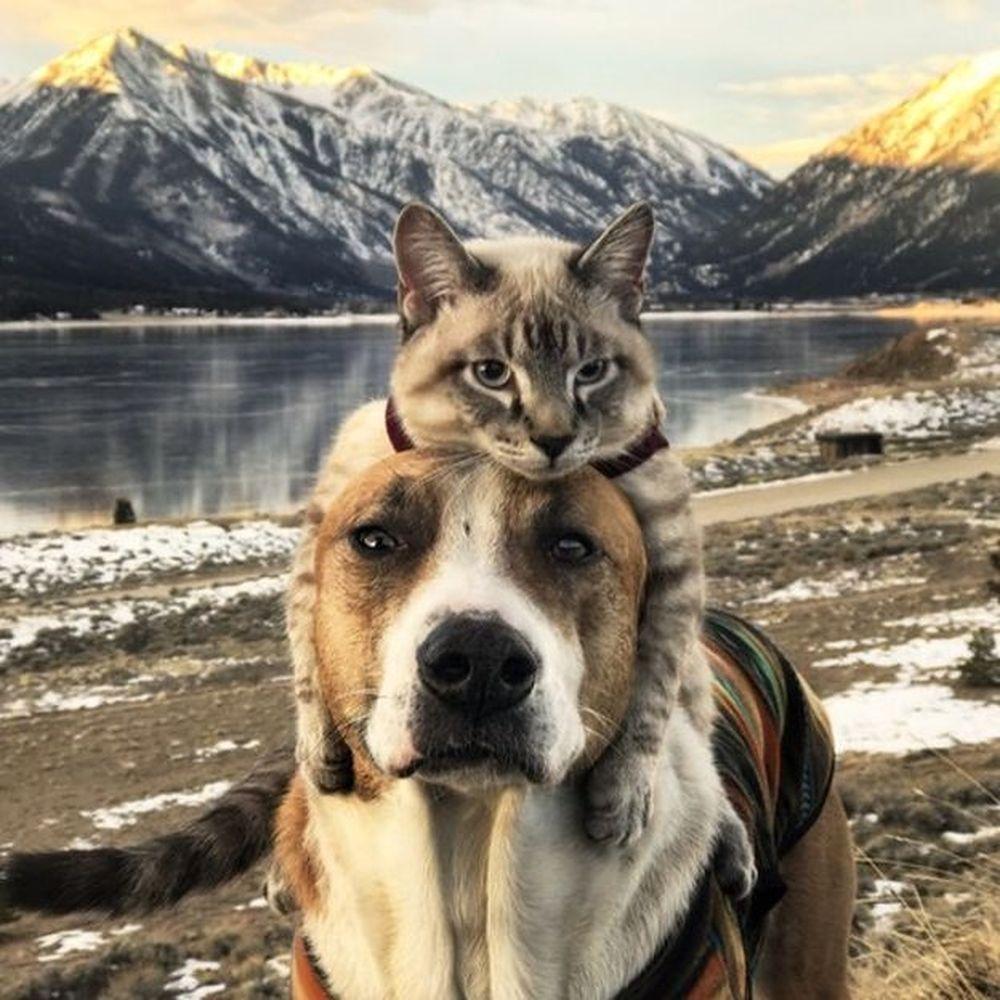 Nửa triệu người follow cặp đôi \u0027chó-mèo\u0027 đi khắp thế giới