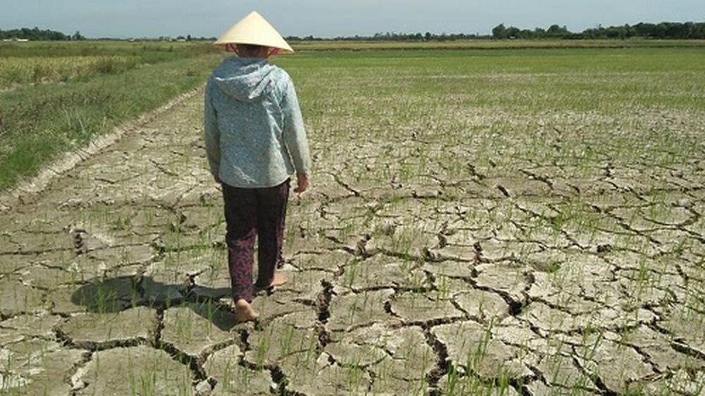 Không Những Thế, Hoạt Động Sản Xuất Nông Nghiệp Cũng Bị Tác Động Tiêu Cực  Khi Nắng Như Đổ Lửa Khiến Đất Đai Trở Nên Cằn Cỗi Vì Thiếu Nước.