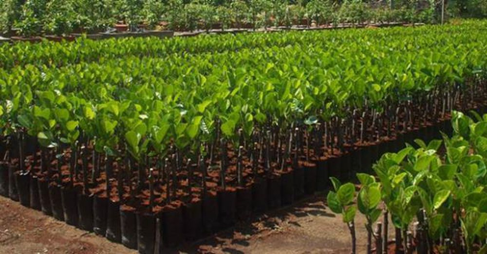 Tăng cường các biện pháp nâng cao chất lượng giống cây trồng lâm ...