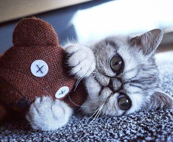 Картинки по запросу кот с выпученными глазами