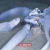 Cận cảnh loài cá độc dưới đáy biển sâu lập tức 'tan chảy' nếu bị đưa lên mặt nước