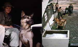 Ảnh hiếm về chó nghiệp vụ Mỹ thời chiến tranh Việt Nam