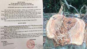 Phá rừng phòng hộ A Lưới: Đội trưởng bảo vệ rừng mất chức