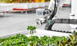 Nông trại đầu tiên ở Mỹ robot thay thế hoàn toàn con người