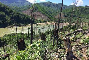 5 đối tượng tấn công nhân viên bảo vệ rừng, cướp tài sản bị khởi tố