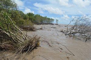 Cà Mau đã mất hơn 8.800 ha đất rừng phòng hộ do biến đổi khí hậu