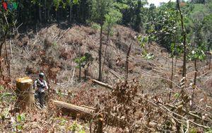 Điều tra dấu hiệu trục lợi hơn 5 tỷ đồng ở BQL rừng Đăk Đoa