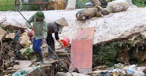 Bắc Giang khốn khổ vì dòng kênh lợn chết đổ về từ Thái Nguyên
