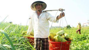 Vui mùa quả ngọt ở Tuy An