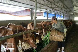 Người Mông 'nuôi bò trên lưng' thoát nghèo