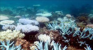 Nghiên cứu về san hô đi ngược lại giả thuyết khoa học lâu nay