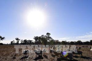 Australia bổ sung gần 700.000 USD để cứu trợ hạn hán