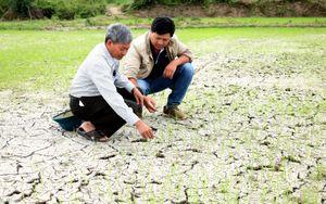 Gia Lai: Đề nghị hỗ trợ địa phương bị thiệt hại hơn 6.500 ha cây trồng do hạn