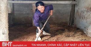 Có 'bí quyết' này, bà con Cẩm Xuyên yên tâm khi chăn nuôi nông hộ