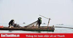 Mùa săn moi biển