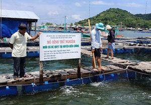 Kiên Giang: Cá bè quỵt, đối tượng nuôi mới của ngư dân Kiên Lương