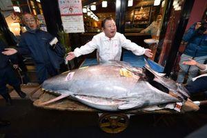 Vua cá ngừ Nhật chi 1,8 triệu USD mua con cá ngừ vây xanh siêu hiếm