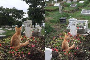 Xúc động cảnh mèo ngồi 'đau đáu' trước mộ chủ nhân qua đời