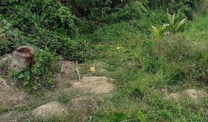Tiền Giang: Đi thăm vườn, người đàn ông nguy kịch vì vướng vào bẫy điện của hàng xóm
