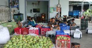Khánh Hòa: Xoài, chuối thu mua ổn định