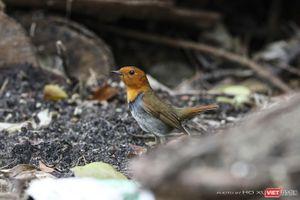 Chùm ảnh: Những 'siêu mẫu' được săn đón ở Sơn Trà vào mùa chim di cư