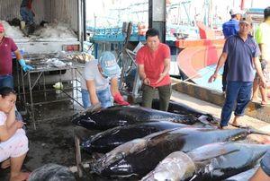Khánh Hòa: Thị trường 'ăn chậm' cá ngừ đại dương