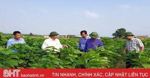 Lần đầu tiên xuất hiện ở Hà Tĩnh, nghề trồng dâu nuôi tằm đã 'phát tài'