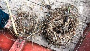 Công an vào cuộc vụ hàng trăm bẫy thú trong khu bảo tồn ở Hà Tĩnh