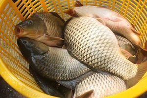 Cá chép gắn mác cá sông bán đầy, người bán cá tiết lộ mẹo nhỏ không mua nhầm