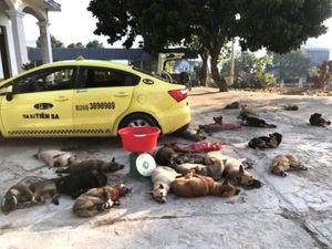 Nhóm trộm dùng taxi chở 22 con chó đi tiêu thụ thì bị bắt