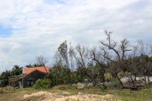 Khánh Hòa: Bức tử rừng bần xây nhà trái phép
