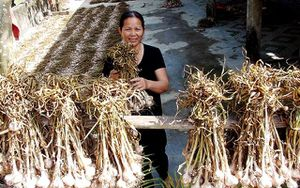 Hiệu quả từ OCOP ở Quảng Bình